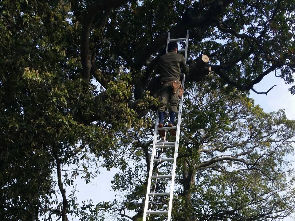 植木剪定・草刈り・高木伐採は和歌山市の池田造園(植木屋)